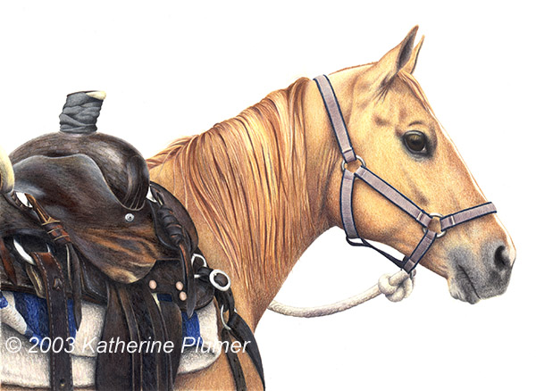 colored pencil horse drawing