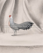 Silver Phoenix Chicken Art Drawing